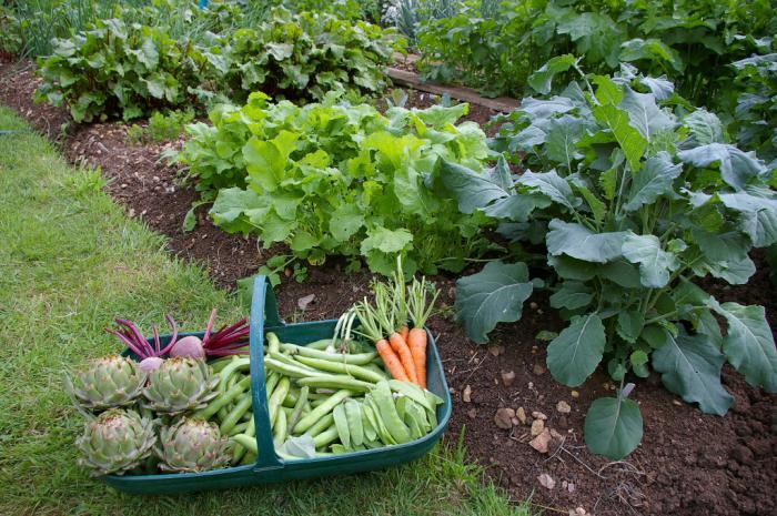распылитель для полива огорода
