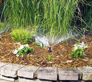 распылитель для полива бешеный цветок