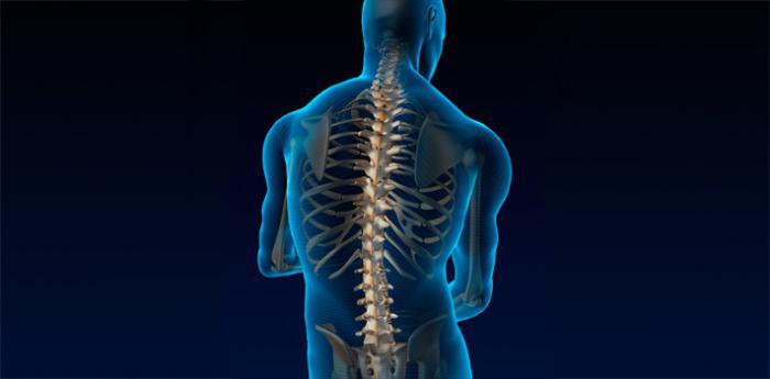 Отзывы протезирование тазобедренных суставов