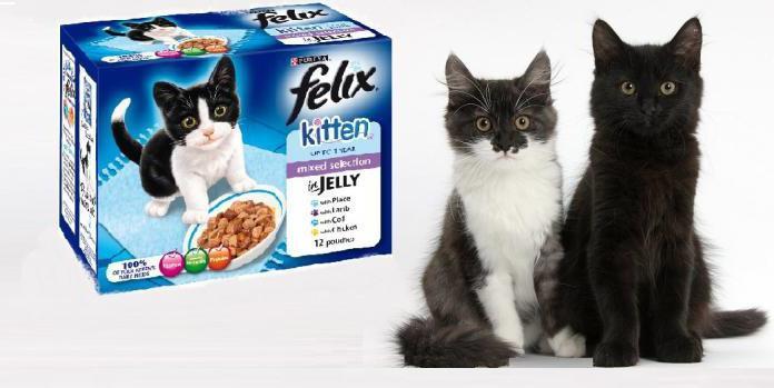 Кошки Купить Дешево