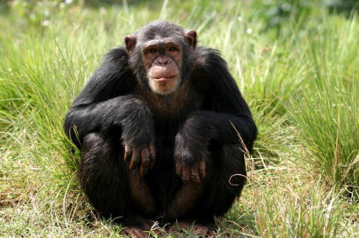 тропическая обезьяна
