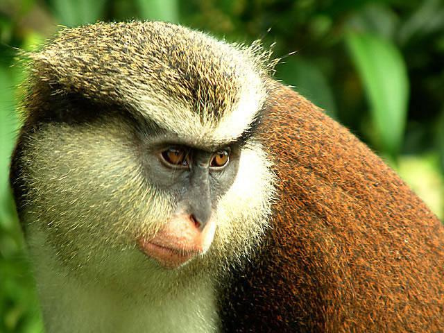 животные тропиков обезьяны