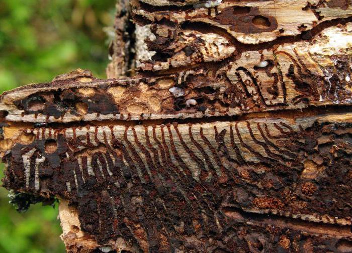 виды жуков фото