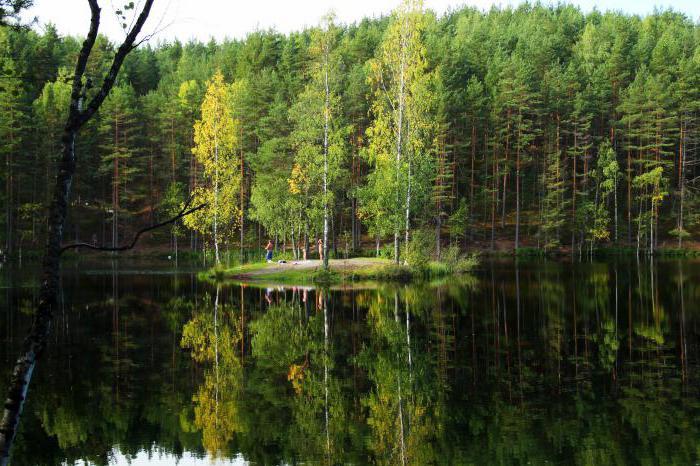 карельские леса деревья