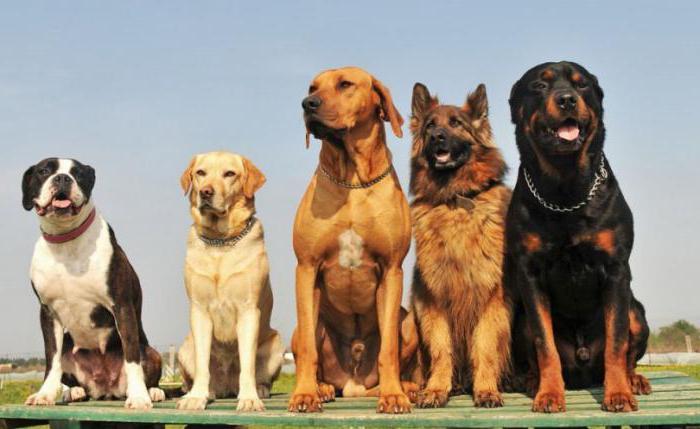 определить по фото породу собаки