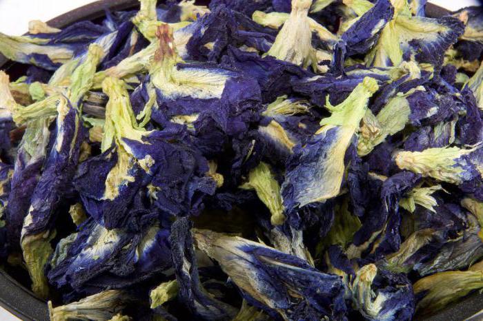 голубой чай из тайланда свойства