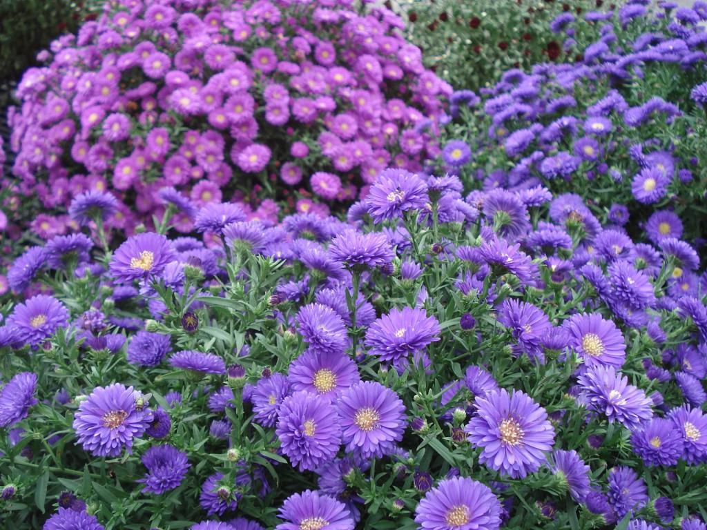 картинки с садовыми цветами и названиями прочитала