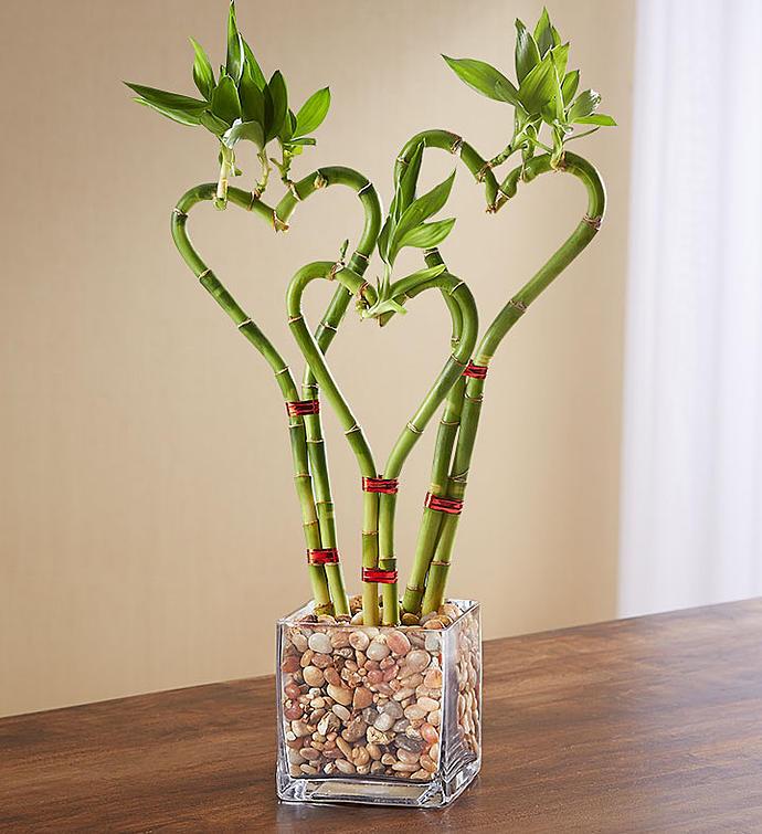 комбайн декоративный бамбук фото проезжих
