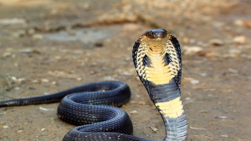 Зеленая змея в Таиланде