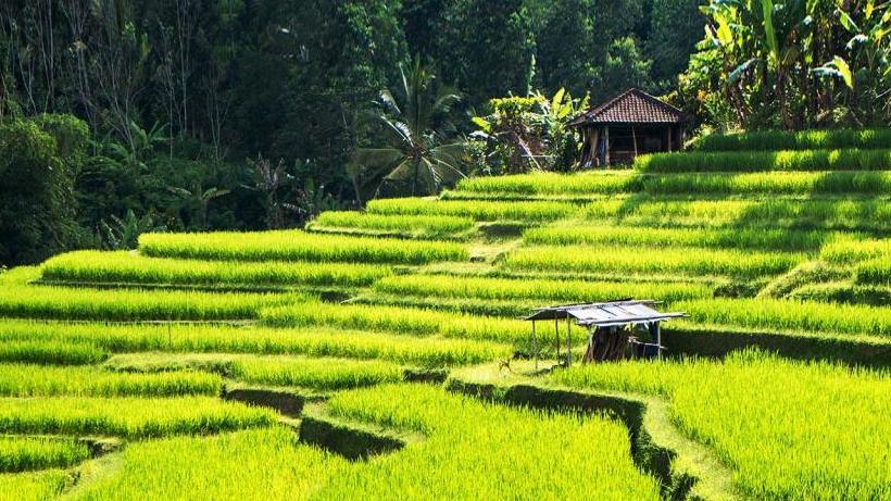 Убуд (Бали, Индонезия): история, достопримечательности, фото