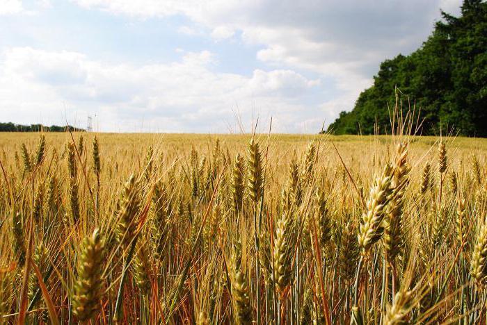 плодородие земель сельскохозяйственного назначения