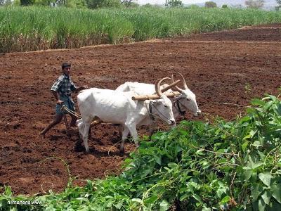 особенности земель сельскохозяйственного назначения