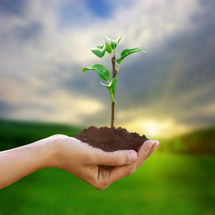 классификатор видов разрешенного использования земель сельскохозяйственного назначения