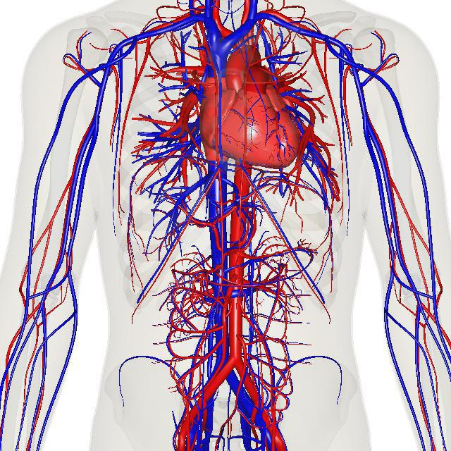 design for cardiovascular system in biology