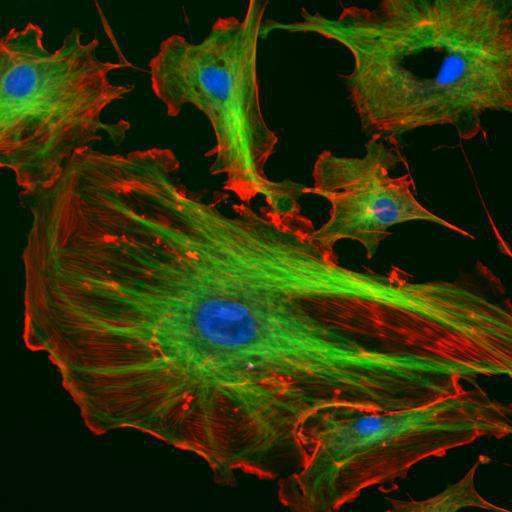 принципы флуоресцентной микроскопии