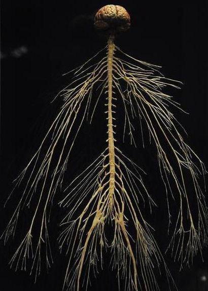 деятельность нервной системы