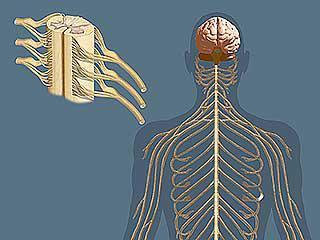состояние нервной системы