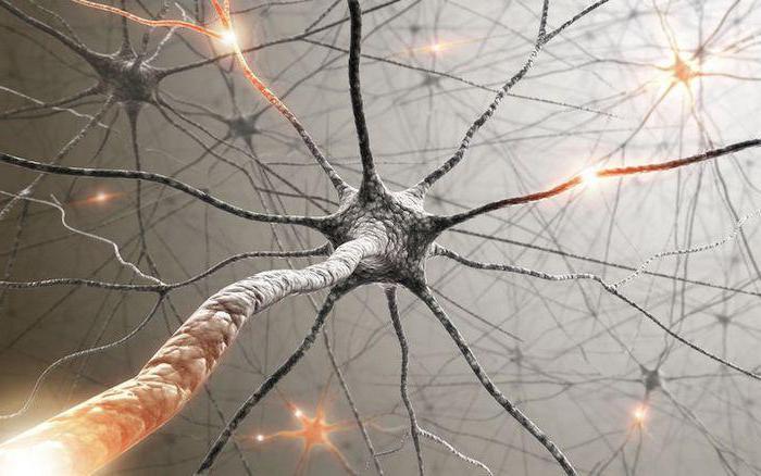 процессы нервной системы