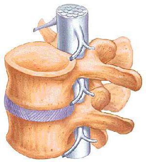 боли в грудном отделе позвоночника упражнения