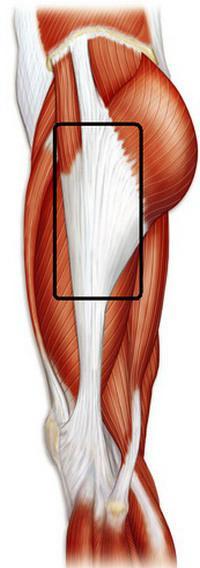 мышцы нижних конечностей человека таблица