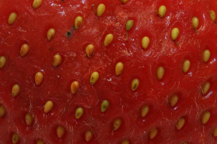 клубника это ягода