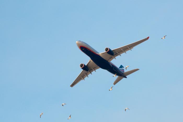 Обмен билетов аэрофлота купленных через приложени