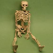 картинки скелет