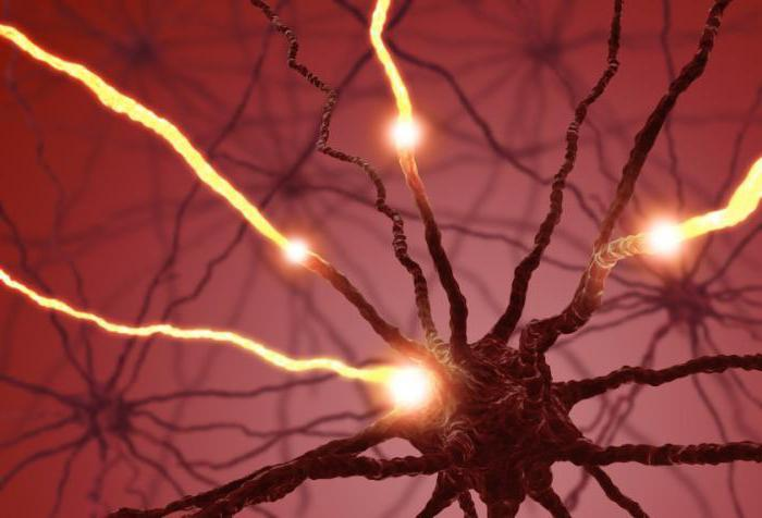 Серотонин: как повысить уровень в организме? Эффективные способы