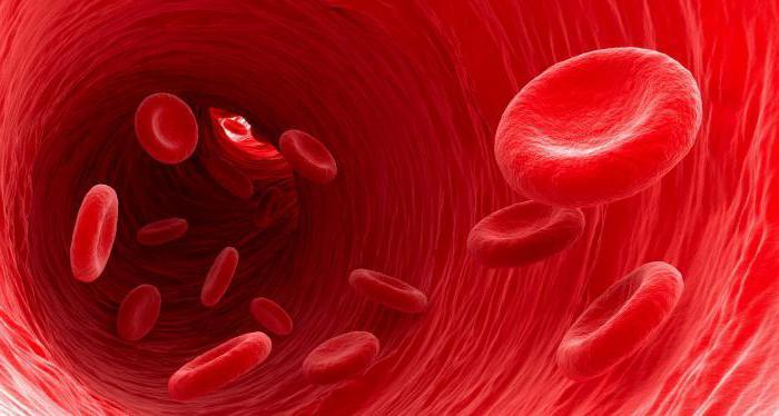 анализ крови повышен холестерин что это значит