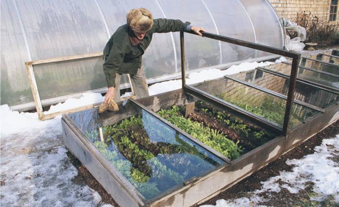 Как сажать семена редиски правильно