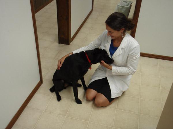 Ветеринарная кот и пес хабаровск