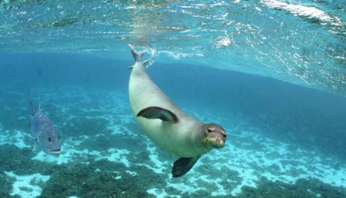 самая большая глубина Тихого океана
