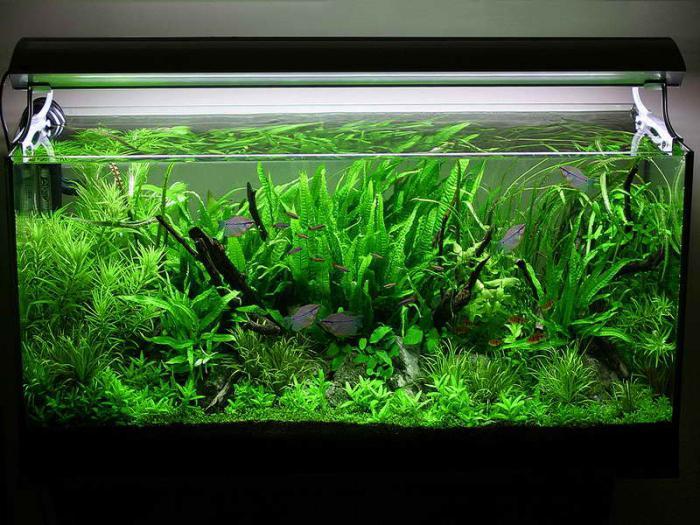 фото аквариумов травников самых