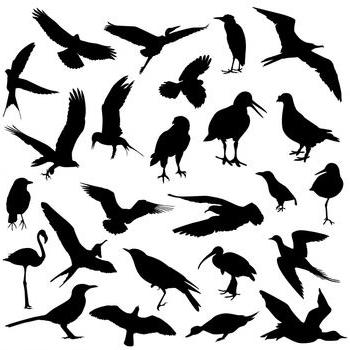 Отряд птиц считается одним из