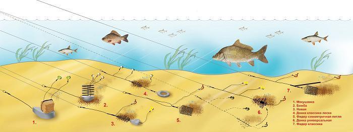 ловля карася на технопланктон