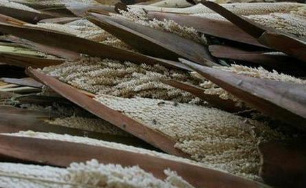 пальмовая пыльца применение