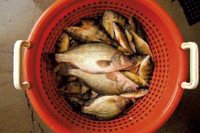 домашние консервы из речной рыбы