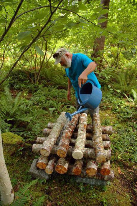 Выращивание грибов на садовом участке для новичков 4