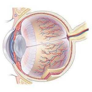 Что такое склера глаза