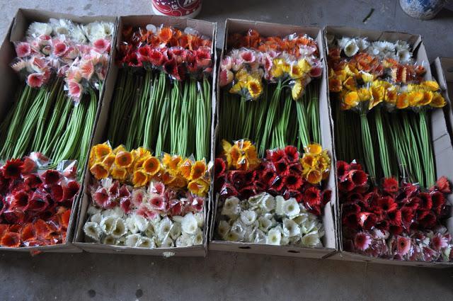 как вырастить цветы в теплице