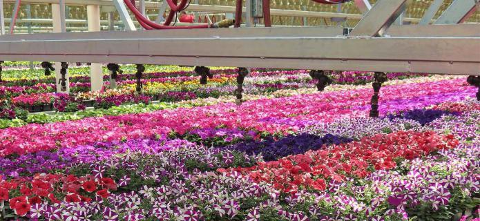 цветы выращивание на продажу [