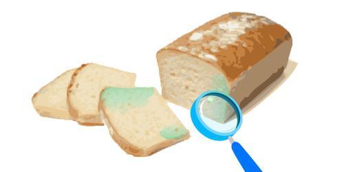 как вырастить на хлебе плесень