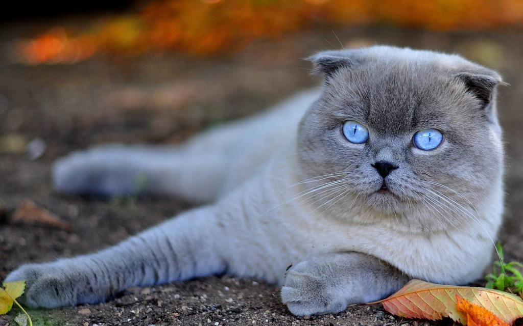 коты английской породы