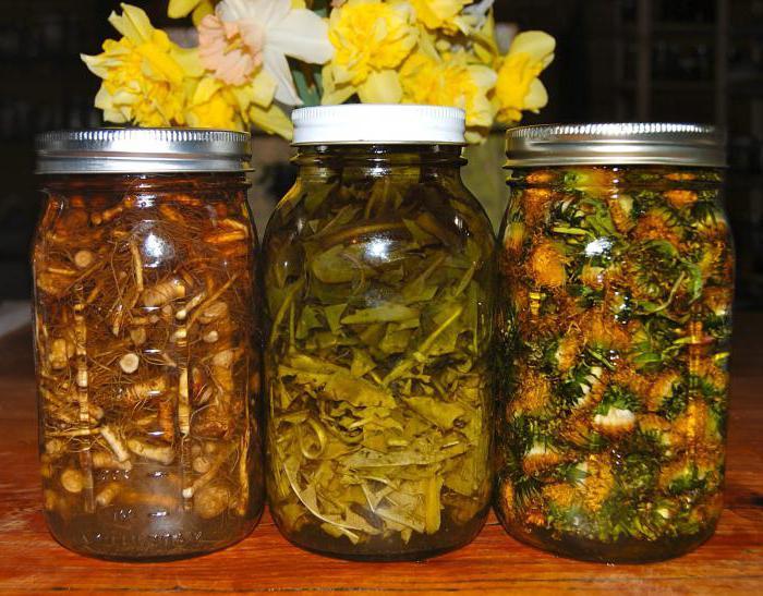 Лечебные свойства листьев одуванчика. Применение листьев ...