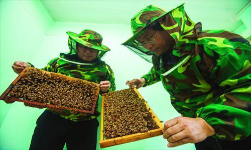 Лечение вен на ногах пчелами thumbnail