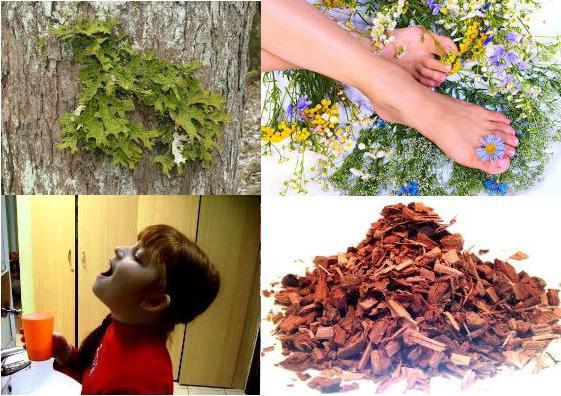 кора дуба и ее лечебные свойства
