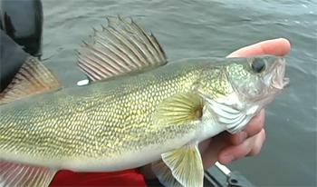 клюет ли рыба после дождя на речке