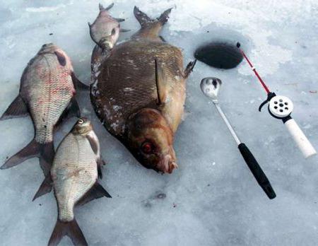 Ловля леща зимой на течении