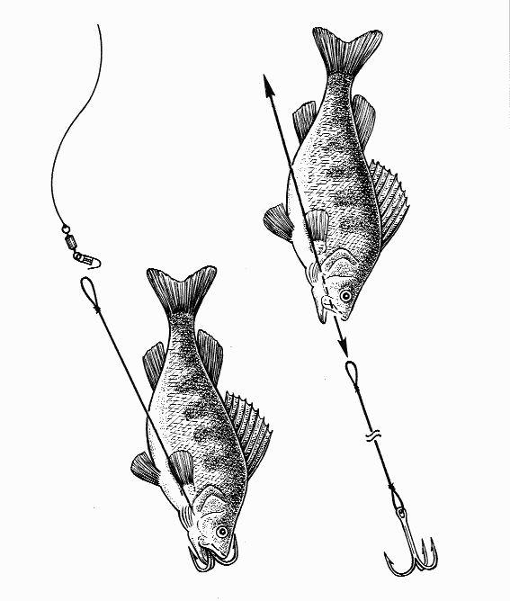 Приманка на жерлицы вместо живой рыбы