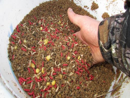 Прикормка для ловли плотвы весной рецепт
